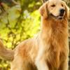 Nossos Cães Pascoal