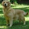 Nossos Cães Evita