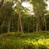 Galeria de Imagens: Espaço para correr e brincar na natureza