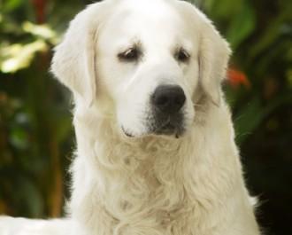 Nossos Cães Nick