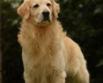 Nossos Cães Scotch