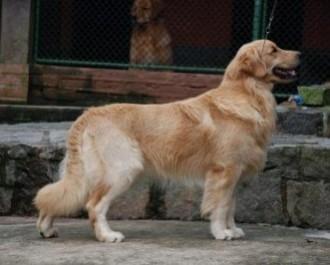 Nossos Cães Skipper