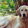 Nossos Cães Tobias