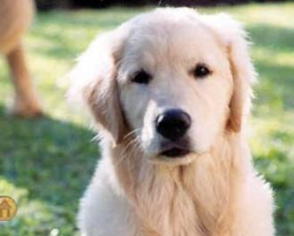 Nossos Cães Victor