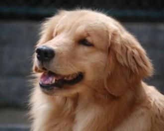 Nossos Cães Stella