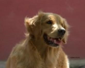 Nossos Cães Rebeca