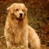 Nossos Cães Bo