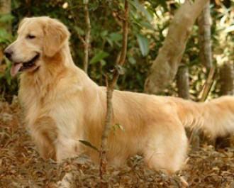 Nossos Cães Maui