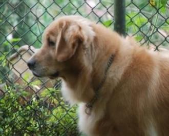 Nossos Cães Margaux