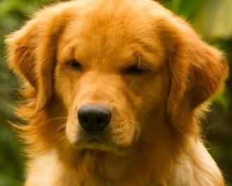 Nossos Cães Malu