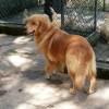 Nossos Cães Maggie