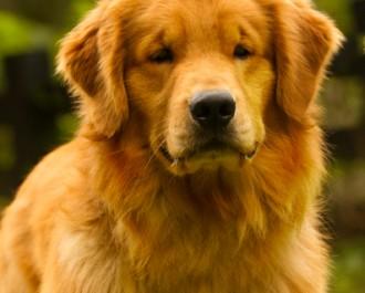 Nossos Cães Bruce (Winner)