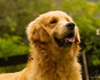 Nossos Cães Hope