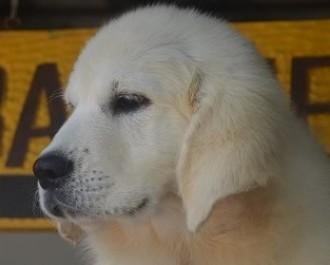 Nossos Cães Branca