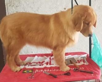 Nossos Cães Ruby