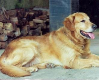 Nossos Cães Logan