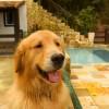Galeria de Imagens: Eles adoram o espaço da piscina