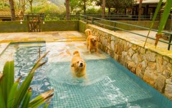 Galeria de Imagens: Piscina especialmente desenvolvida para nossos cães.