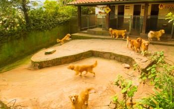 Galeria de Imagens: Passeadores amplos para nossos cães e hospedes