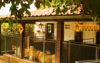 Galeria de Imagens: Canis arejados e protegidos do tempo