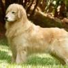 Nossos Cães Malibu