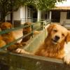 Galeria de Imagens: Nossos cães adoram nosso espaço!